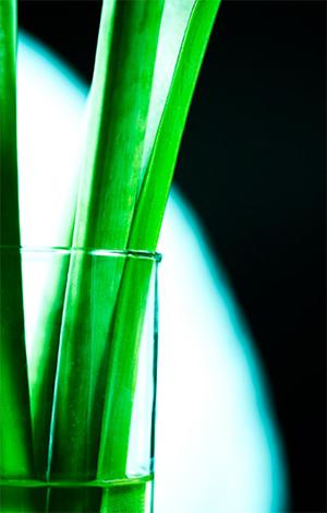 Banek Blumen kreativ fotografieren