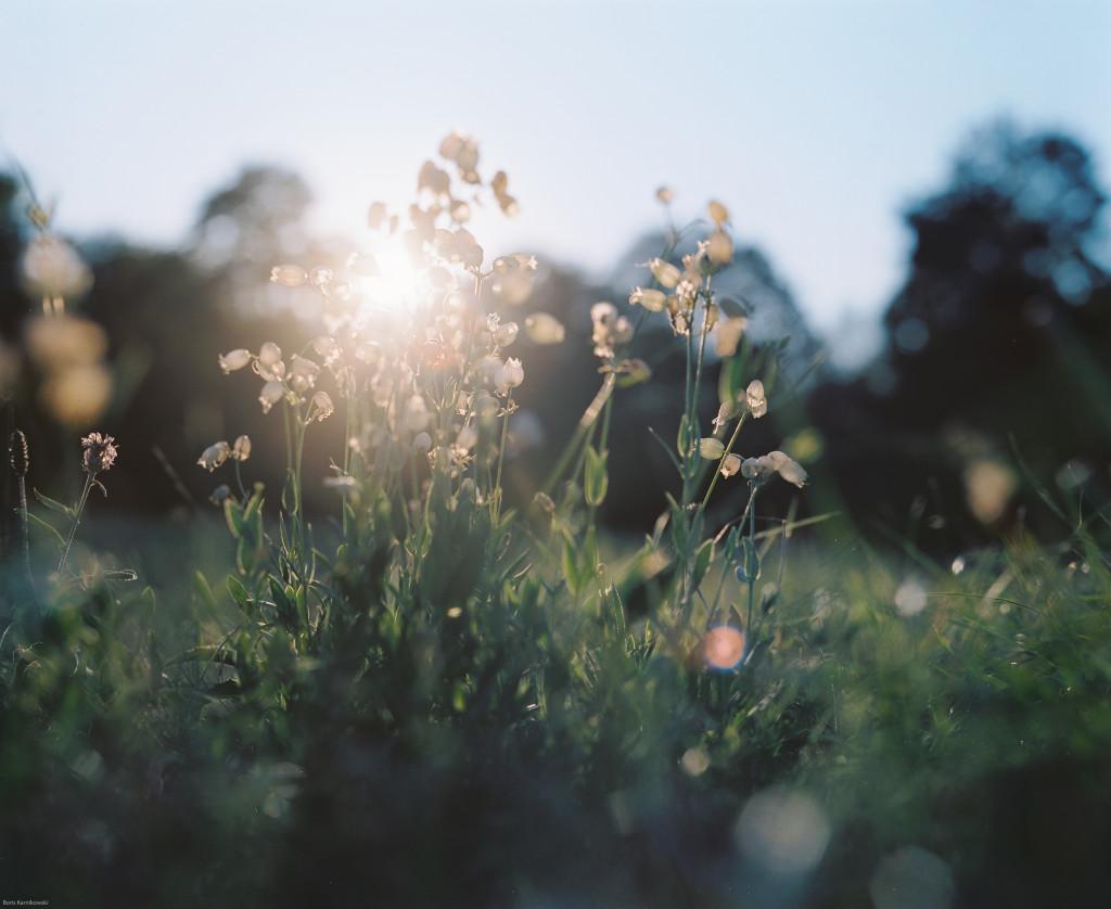 Eine Gegenlichtaufnahme der untergehenden Sonne, die durch Blüten scheint.