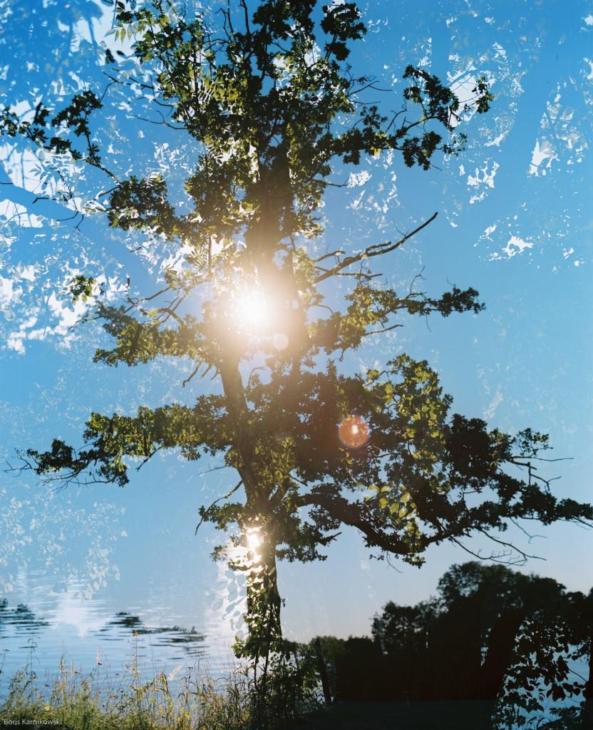 Doppelbelichtung aus an der Isar untergehender Sonne und einer Eiche im Englischen Garten.
